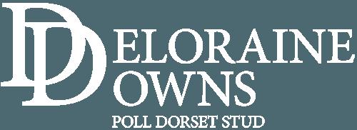 Deloraine Downs Poll Dorset Stud